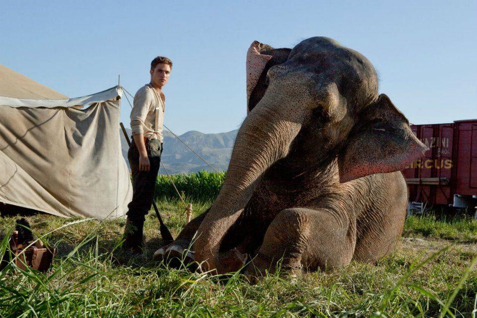 Come Lacqua Per Gli Elefanti Film Cast Stasera In Tv 17