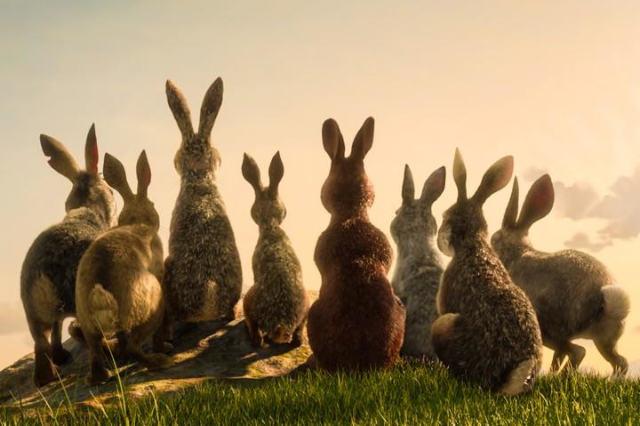 Netflix dicembre - La collina dei conigli