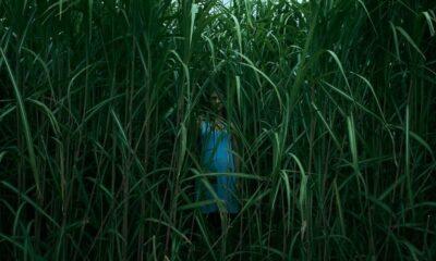 Novità Netflix - Nell'erba alta