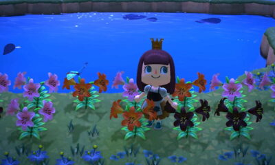 animal crossing isole rare